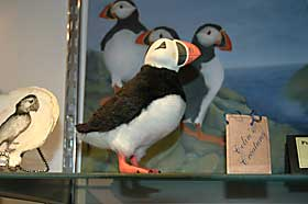 Stuffed Puffin Toy